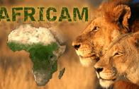 Africam